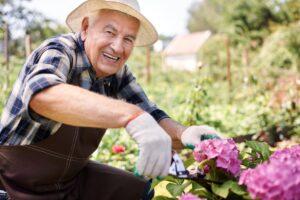 Mature Man Gardening